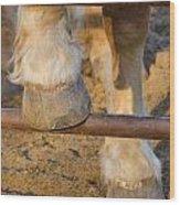 Horses 4 Wood Print