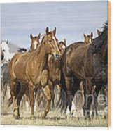 Horses-animals-2 Wood Print