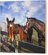 Horses At The Fence Wood Print