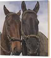 Horses  Belonging To Chagras Ecuador Wood Print