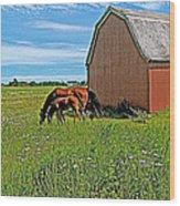 Horses By A Barn Along Confederation Trail-pei Wood Print