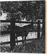 Horses By The Fence Wood Print
