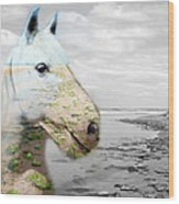 Horses Dream Wood Print by Jo Collins