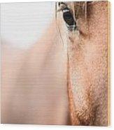 Horses Eye No. 2 Wood Print