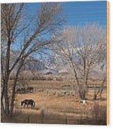 Horses Graze Beside The Owens River Near Bishop Wood Print