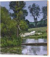 Horses Grazing At Water's Edge Wood Print