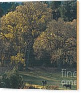 Horses In A Backlit Field With Fall Colored Trees Sedo Wood Print
