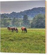 Horses In A Field 2 Wood Print