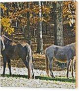 Horses In Autumn Pasture   Wood Print