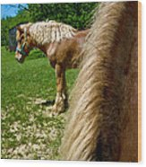 Horses In Meadow Wood Print