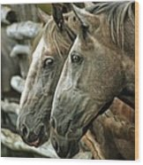 Horses Looking Through The Fence Wood Print