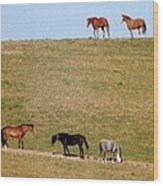 Horses Of Hayward Wood Print