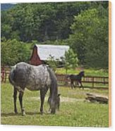 Horses On A Farm Wood Print