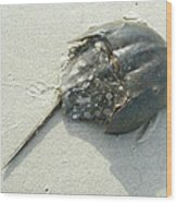 Horseshoe Crab - Limulus Polyphemus Wood Print