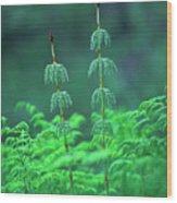 Horsetails Wood Print
