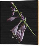 Hosta Flower After The Rain Wood Print