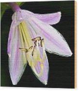 Hosta In Bloom Wood Print