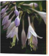 Hosta Petals Wood Print