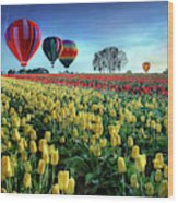 Hot Air Balloons Over Tulip Field Wood Print