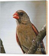 Hot Cardinal Wood Print