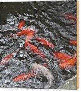 Hot Orange Carp Fish Wood Print