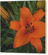 Hot Orange Lily  Wood Print