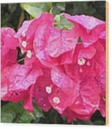 Hot Pink Bougainvillea Wood Print