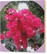 Hot Pink Crepe Myrtle Blossoms Wood Print