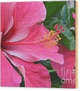 Hot Pink Hibiscus 2 Wood Print