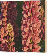 Hot Pink Lupines From My Mother's Garden Wood Print