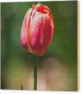 Hot Pink Tulip Wood Print