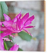 Hot Pink Christmas Cactus Flower Art Prints Wood Print