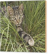 House Cat Hunting In Grass Germany Wood Print