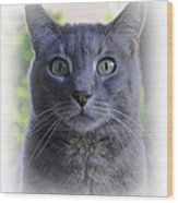 House Cat Stare Wood Print