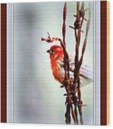 House Finch - Finch 2241-004 Wood Print