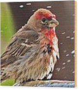 House Finch Wood Print by Helen Carson