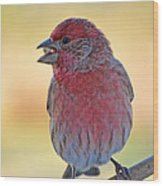 House Finch II Wood Print