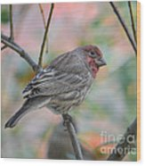 House Finch In Autumn Wood Print