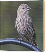 House Finch Wood Print by John Kunze