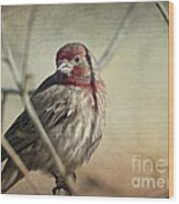 House Finch Two Wood Print