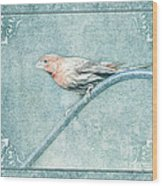House Finch With Colored Sketch Effect Wood Print