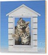 House Of Kittens Ck528 Wood Print