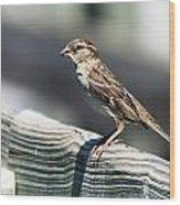 House Sparrow Wood Print