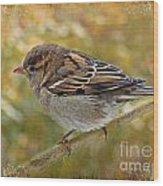 House Sparrow II Wood Print