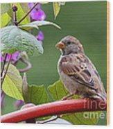 House Sparrow On A Wheel Wood Print