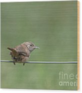 House Wren Wood Print