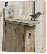 House Wren Feeding Time Wood Print