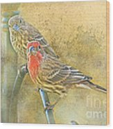 Housefinch Pair With Texture Wood Print