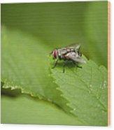 Housefly Wood Print