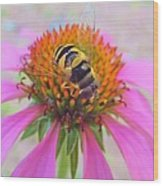 Hover Fly On Purple Coneflower Wood Print